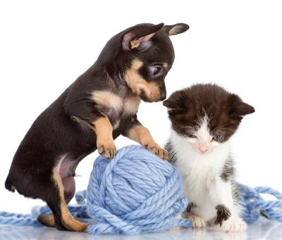 Puppy--Kitten-72DPI_d400